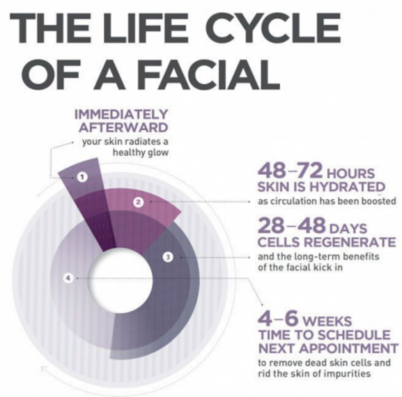 life cycle of the facial
